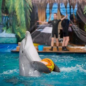 Дельфинарии, океанариумы Икши