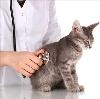 Ветеринарные клиники в Икше